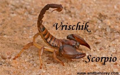 Vrischik – Scorpio